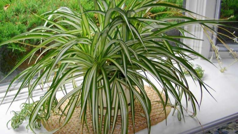 plantaranha